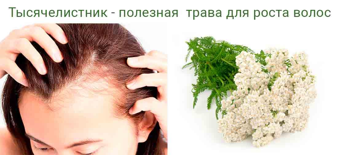 Трава тысячелистник для волос